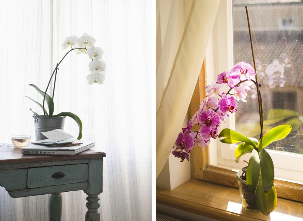 skötselråd för fina orkideer