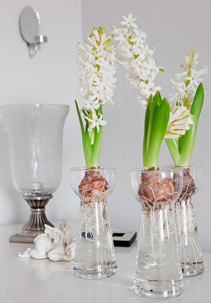 Hyacinter i hyacintglas.