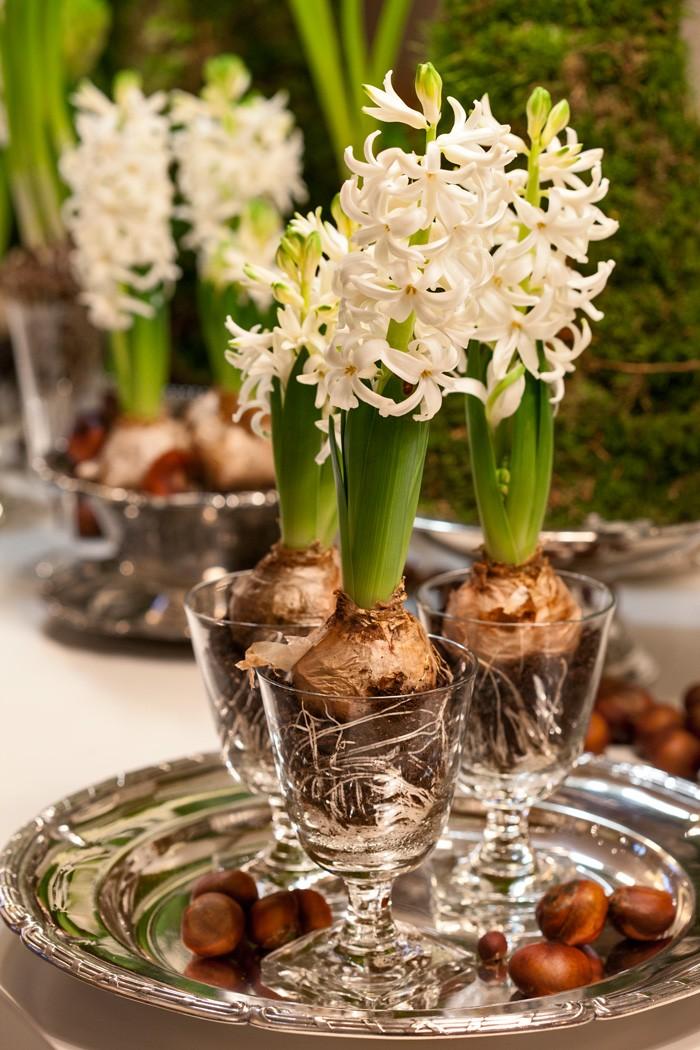 Juldukning med vita hyacinter som planterats direkt i glas på fot.