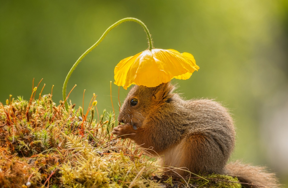 17 söta djur som älskar blommor | Drömhem & Trädgård