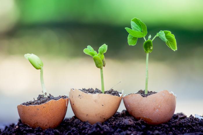 Kasta inte äggskalen! Sätt frön i dem istället. Foto: Shutterstock