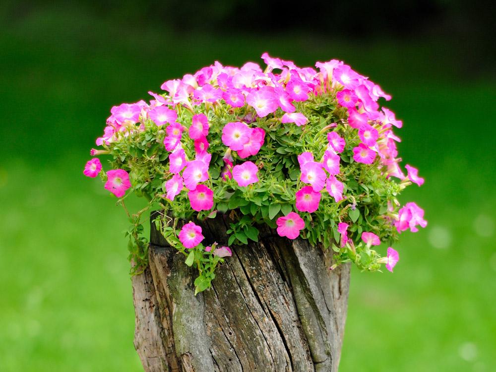 blommor att plantera
