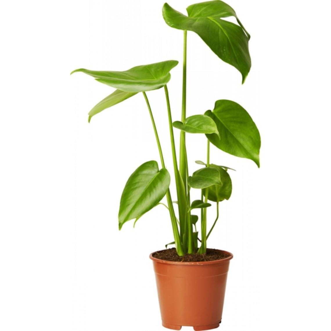 vanliga gröna växter