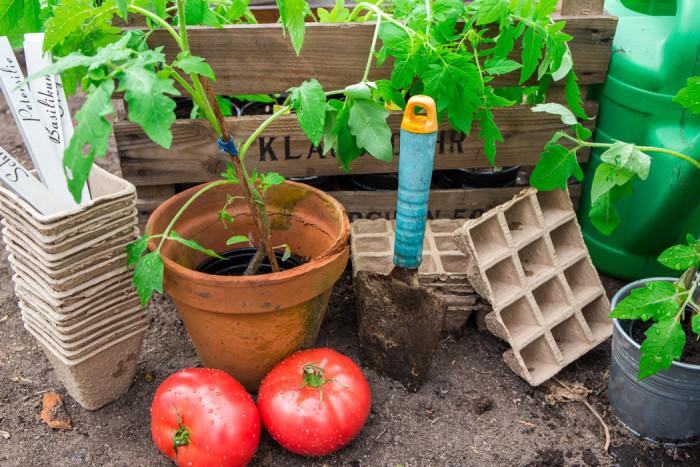 Nu är det dags att börja odla dina egna tomater. Foto: Shutterstock