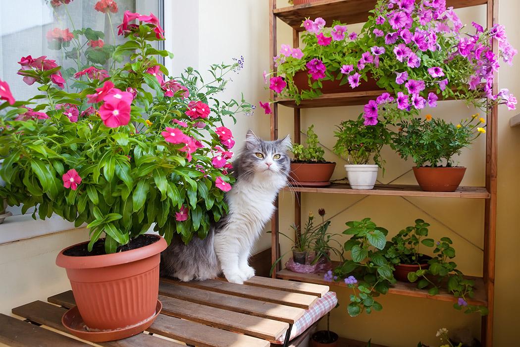hängande blommor balkong