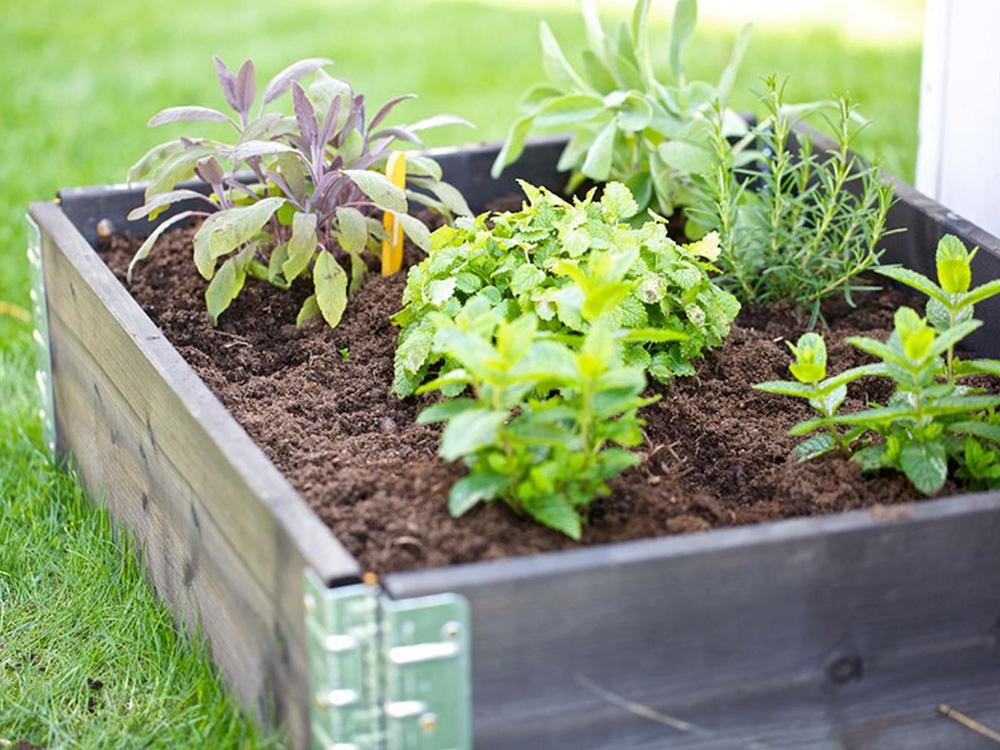 plantera i pallkrage