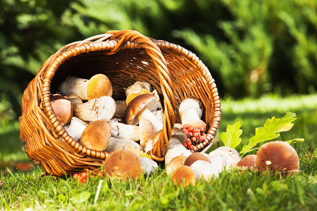 Bildresultat för svamp
