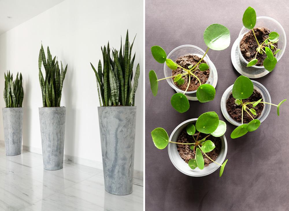 stor tålig växt inomhus