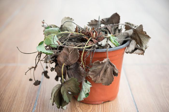 Dör dina växter? Foto: Shuterstock