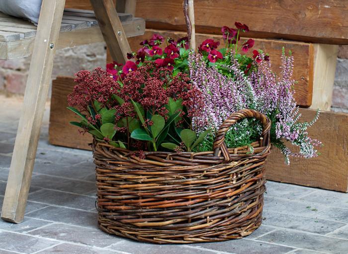 Härliga höstfärger! Foto: Blomsterlandet