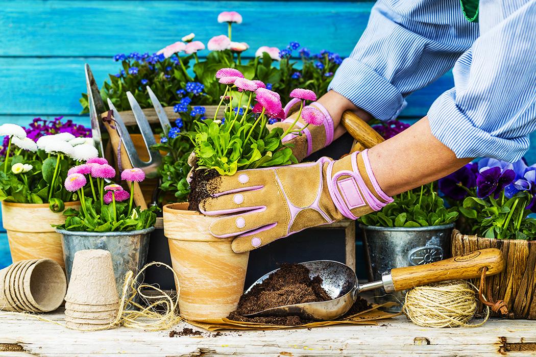plantera om inomhusväxter
