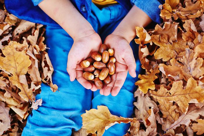 Plocka ekollon och låt dem gro! Foto: Shutterstock