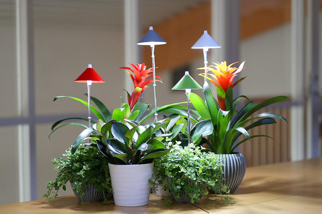lampa för växter