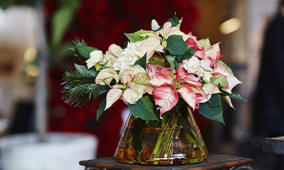 julstjarna-dekorera-snittblomma1