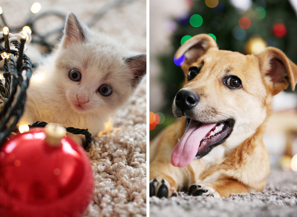 Mat som katter och hundar inte bör äta i jul