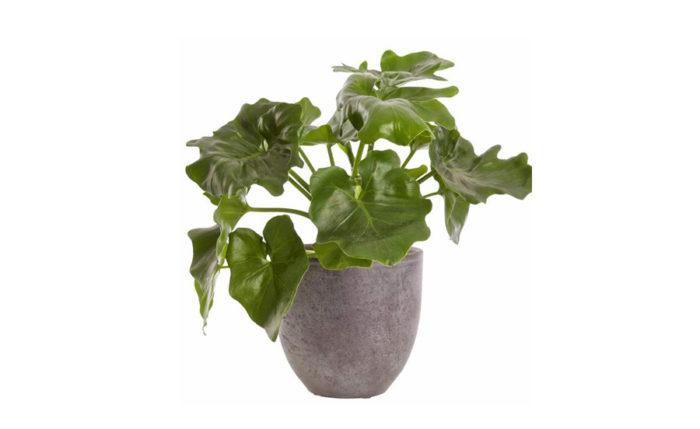 gröna växter som tål solljus