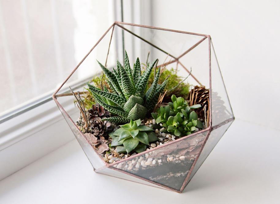 terrarium för växter