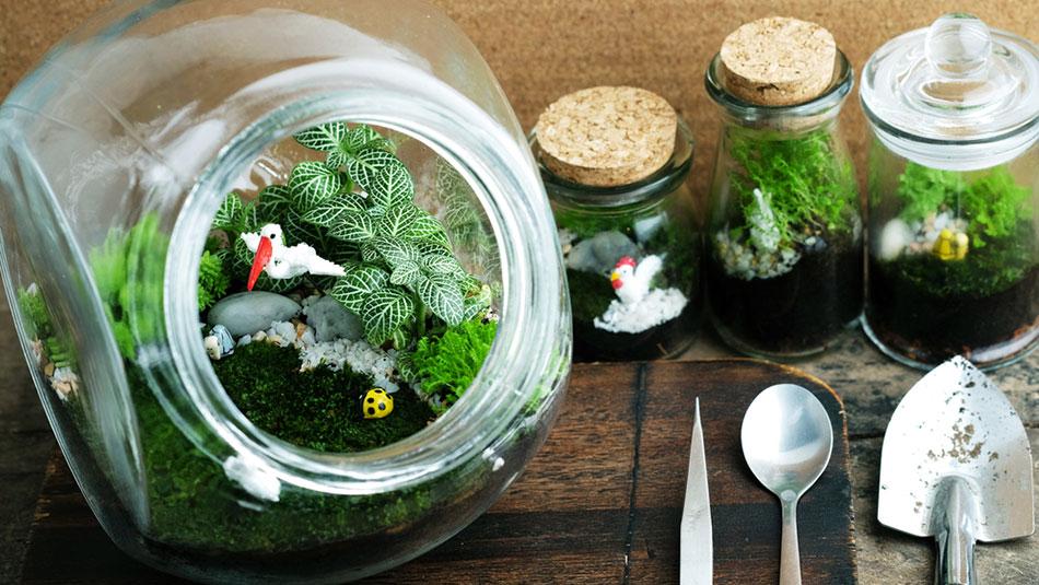 gör eget växtterrarium