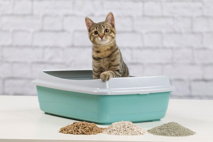 miljövänlig kattsand
