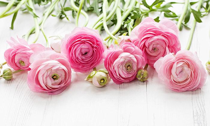 blommor ute april