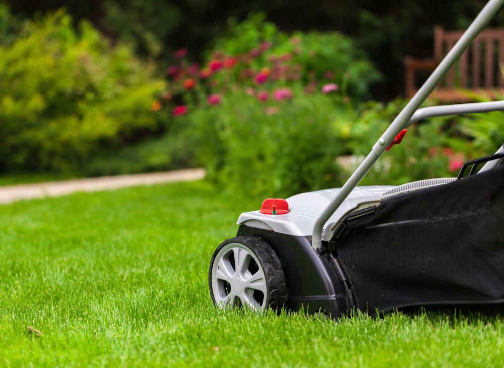 tips för att dressa gräsmatta