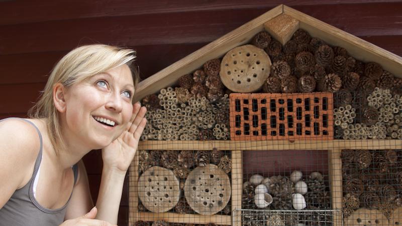 getingar pollinerar