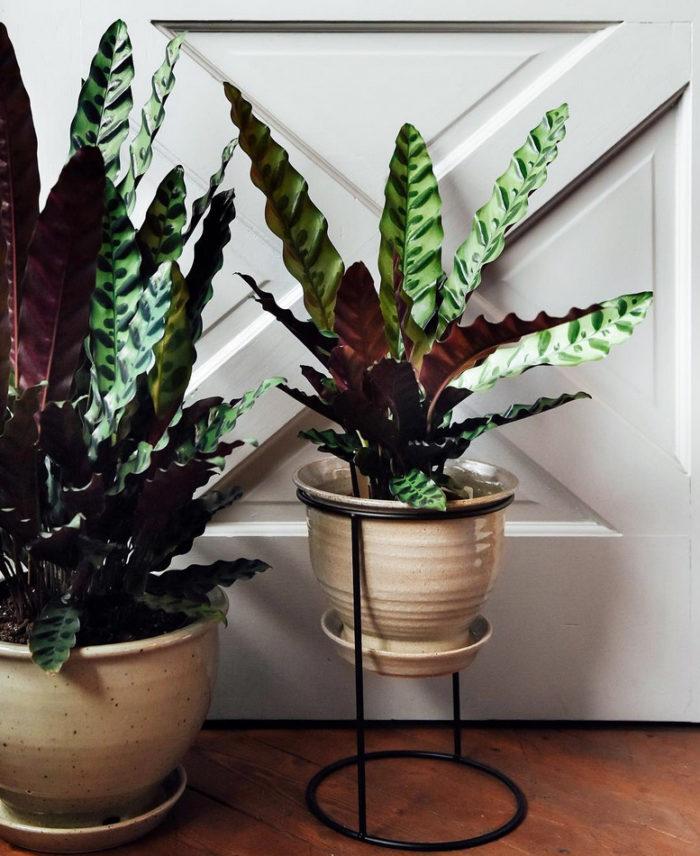 snygga gröna växter