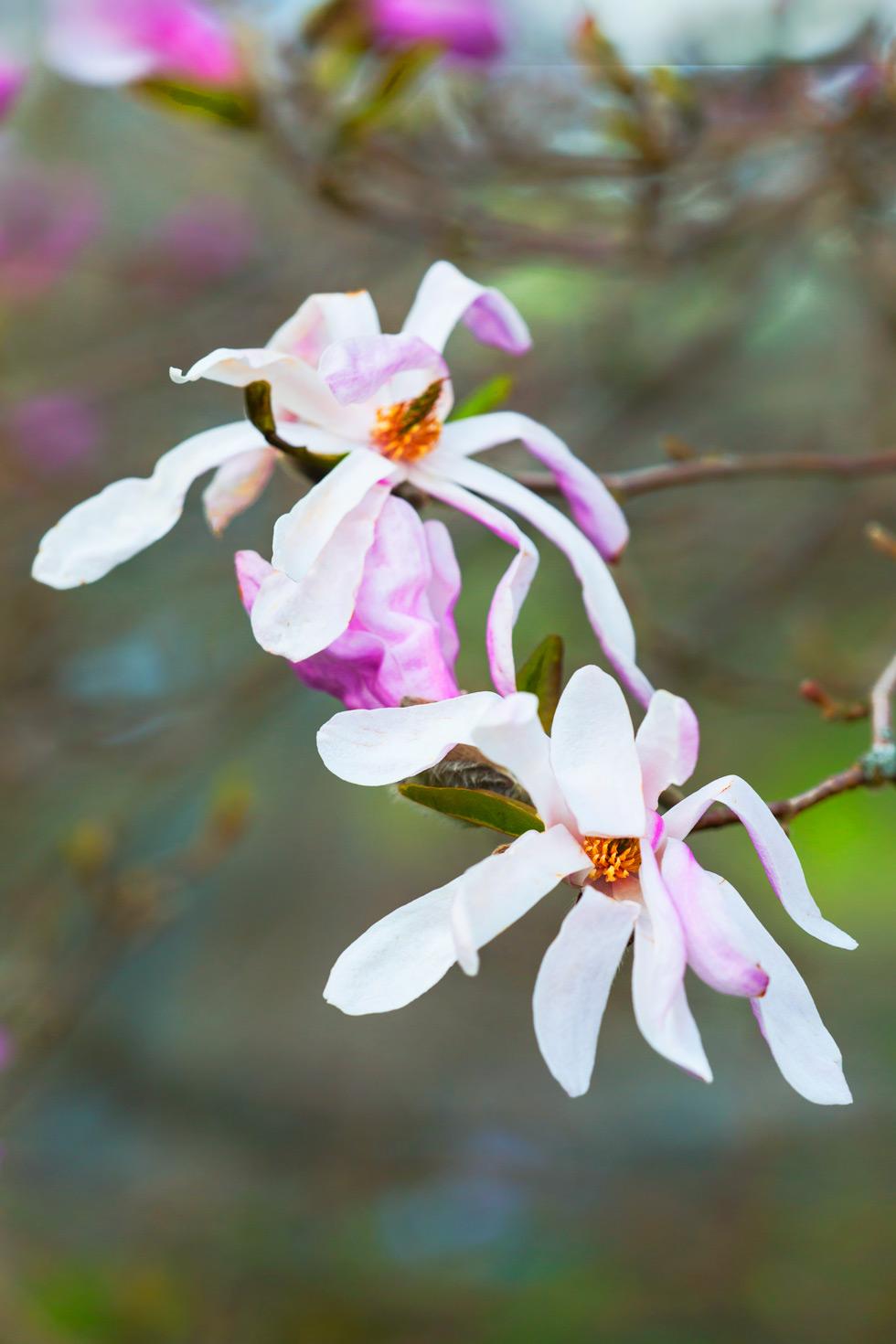 blommande buskar och träd